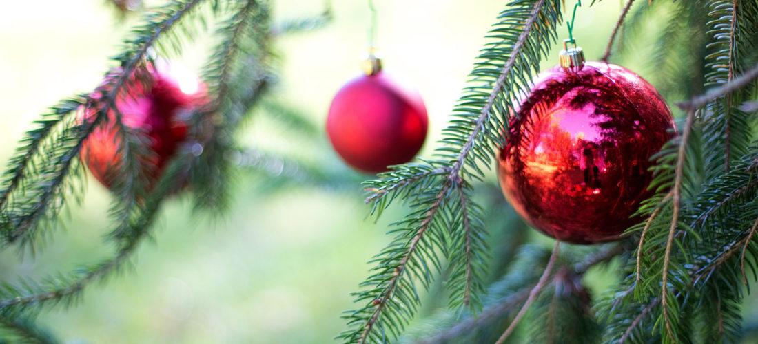 Actividades de Navidad en Potxolines